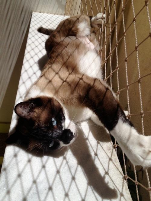 O gato_P2.jpg